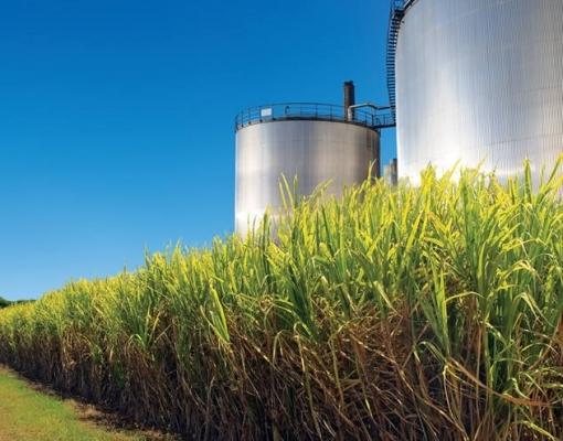 Produtos sucroenergéticos ocupam 5ª lugar no ranking de exportações do agro